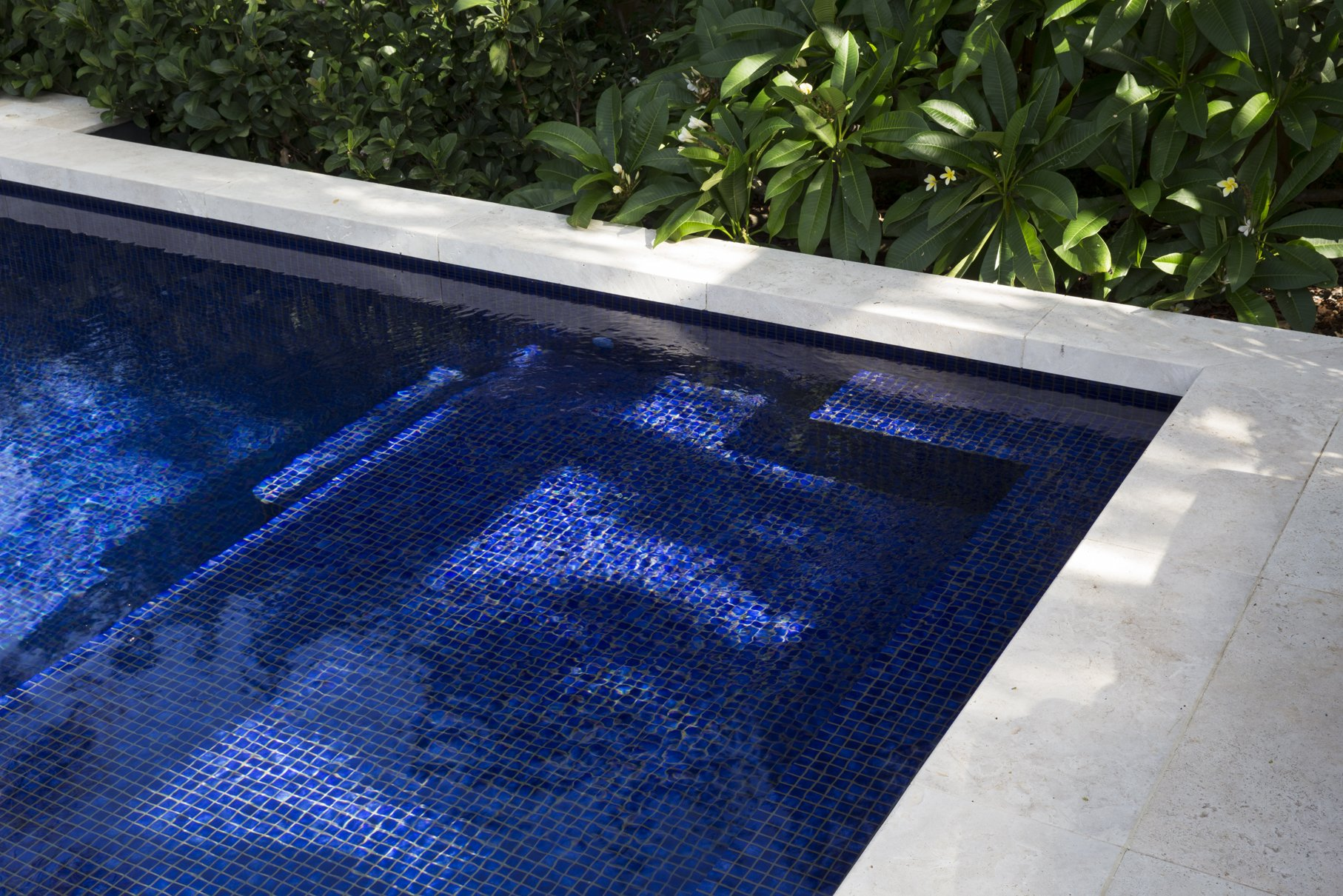 Above ground pool with greenery surrounding it