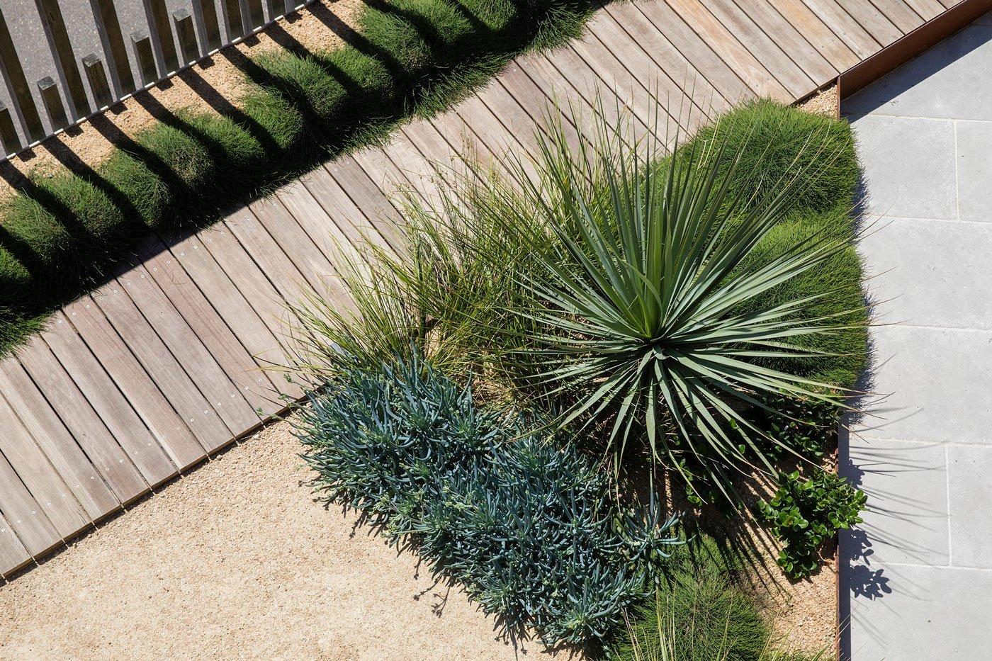 Hardwood timber boardwalk with Nolina Nelsonii plant